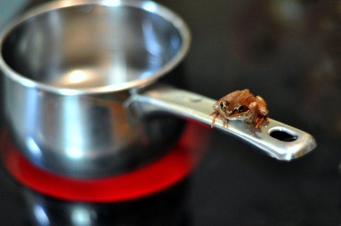 Frog_and_saucepan