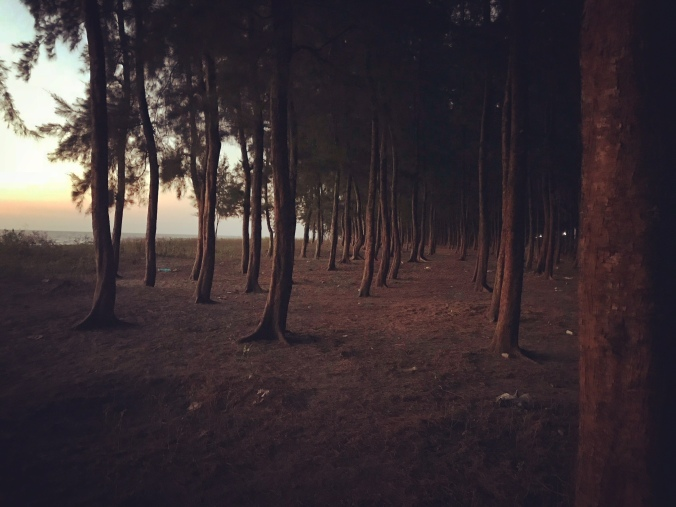 Jhau trees